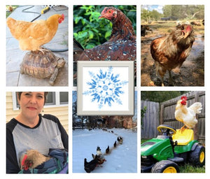 Chicken Moms & Dads You Want to Follow on Instagram This Month - DECEMBER