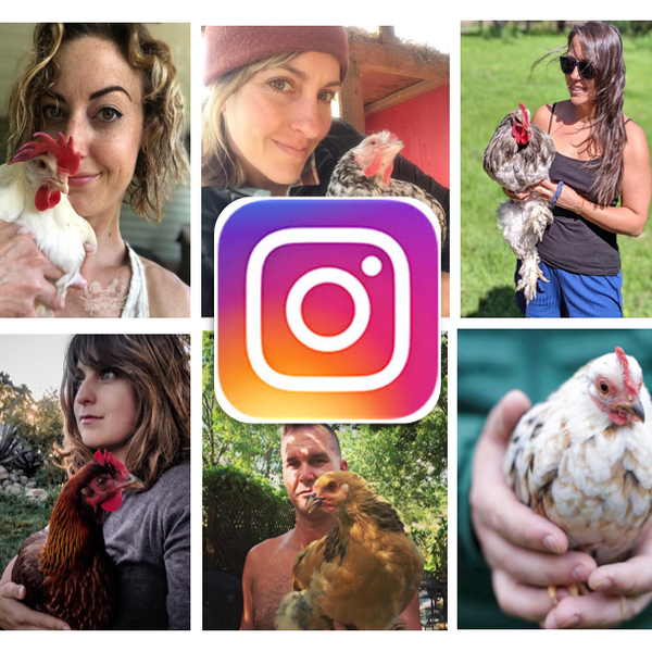 Chicken Moms & Dads You Want to Follow on Instagram This Month