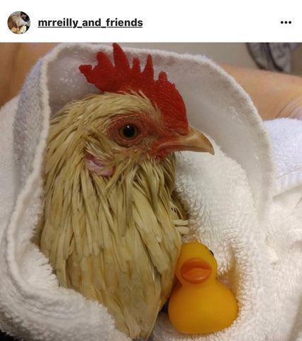chicken in a towel