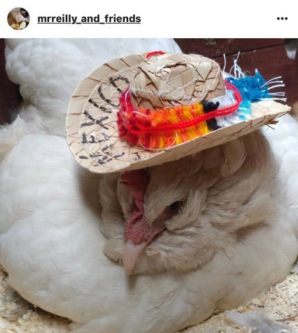 hen in a hat