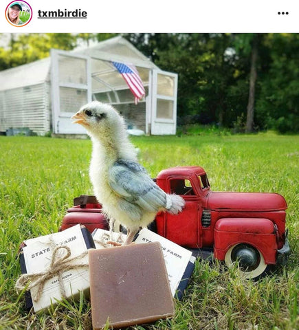 baby chick with toy truck