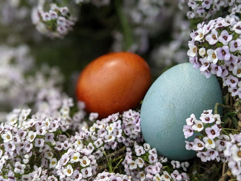 colorful Easter eggs and white flowers
