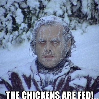 The chickens are fed meme snow
