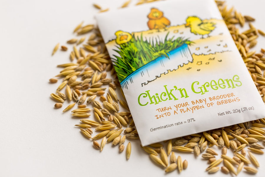 Chick'n Greens™ Organic Seed Packet {w/Free Shipping}