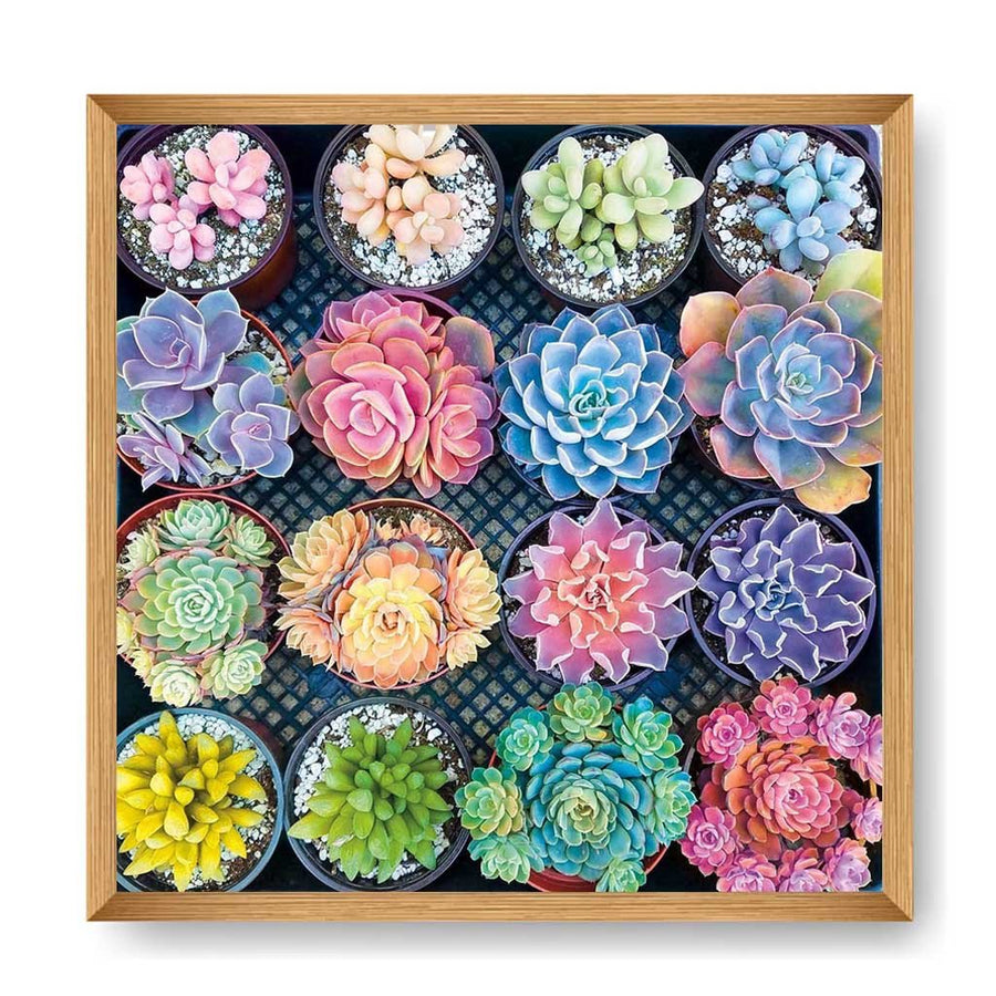 1000pcs Puzzle Jigsaw-Succulents - MYTONSEE
