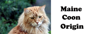 Maine Coon Origin
