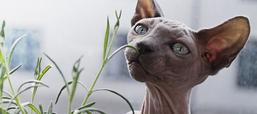 Cat Breeds: Everything you need to know about these cats