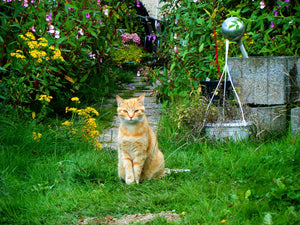 7 Tips to Move Cats away from their Garden and Vegetable Garden