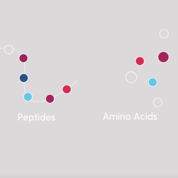 Amino Acids and Their Role in the Human Body