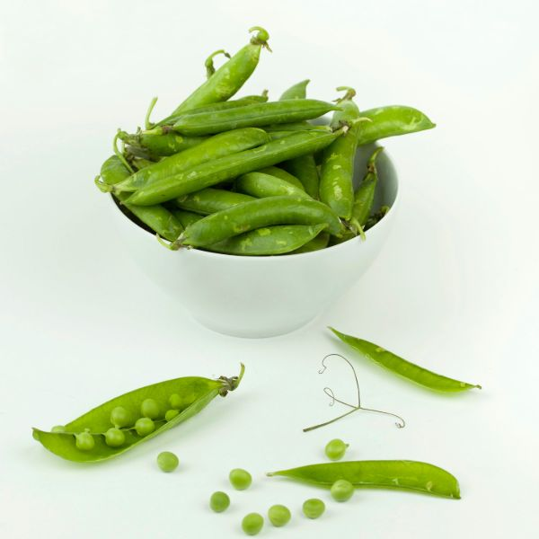 What is the Difference Between Collagen Protein and Pea Protein?