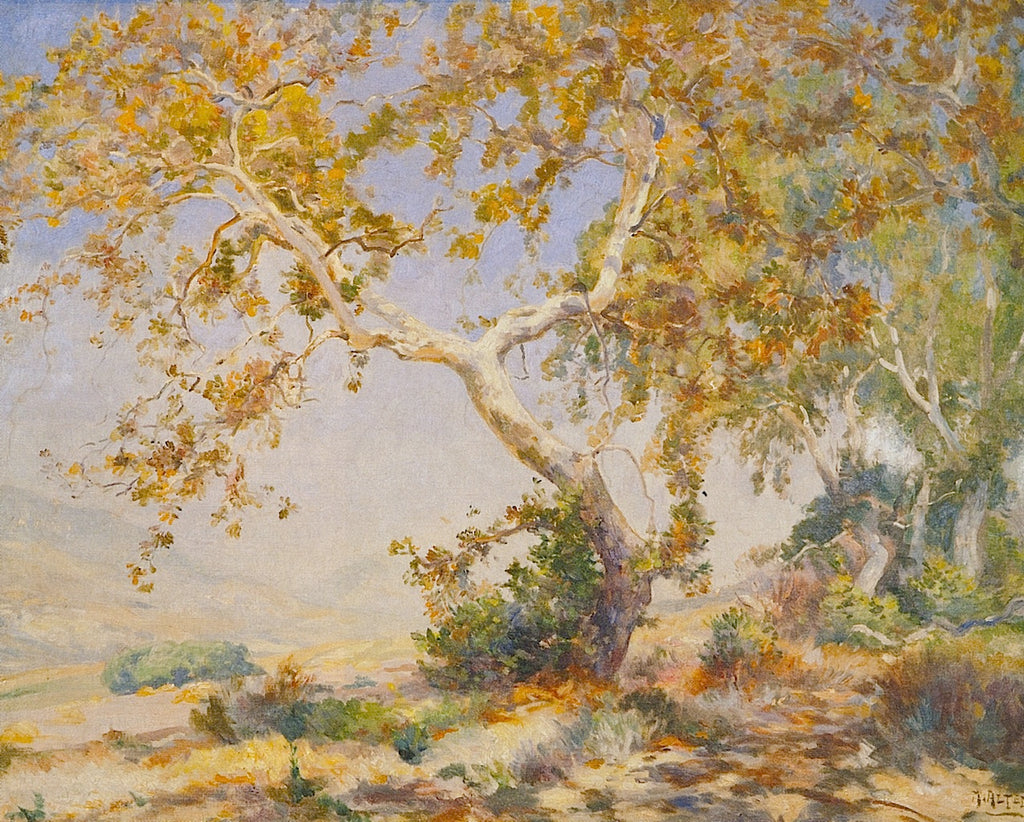 Mathias J Alten - California Sycamore