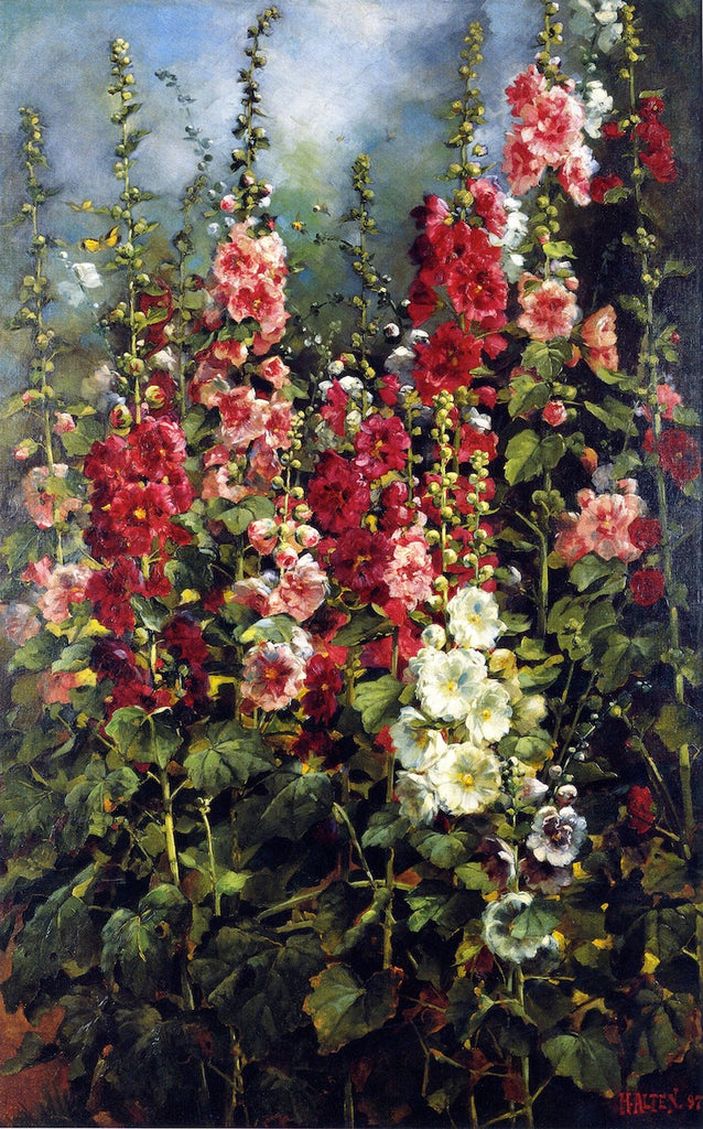Mathias J Alten - Hollyhocks