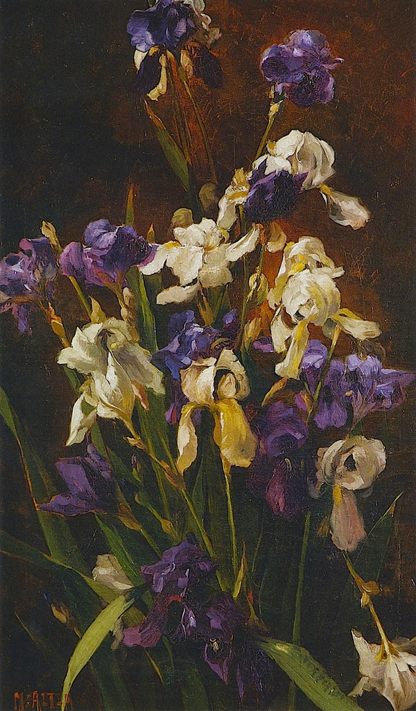Mathias J Alten - Irises