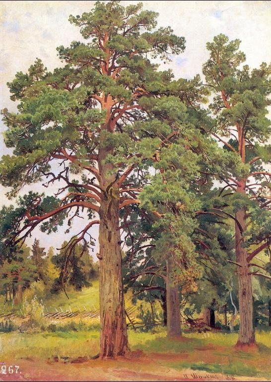 Ivan Shishkin - Pine Without Sunshine