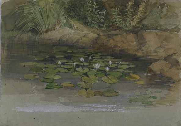 William Dyce - Study of Waterlilies and Other Plants