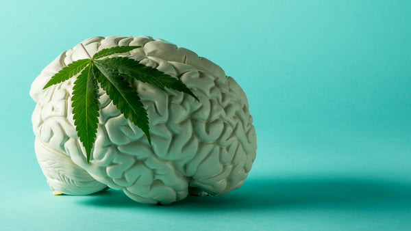 Benefits of CBD for your brain