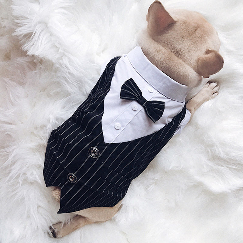 Pet Wedding Clothes For Small/Medium Pugs and French Bulldogs Size Dogs. Choice Of 2 Colours and 5 Sizes - weddingniknaks