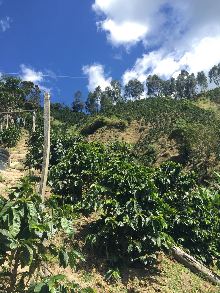 Visiting Huila, Colombia. August 2016