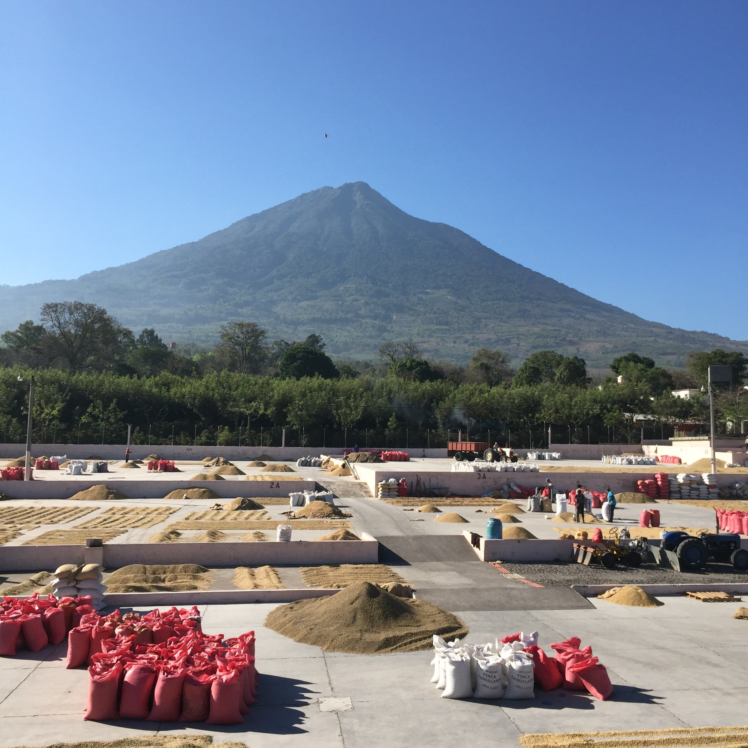 Bella Vista Coffee processing mill in Antigua, Guatemala