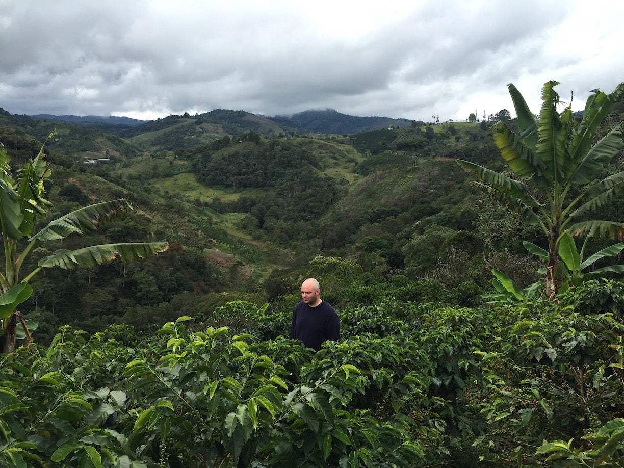 Man in black t-shirt amongst coffee trees in the mountains of Colombia