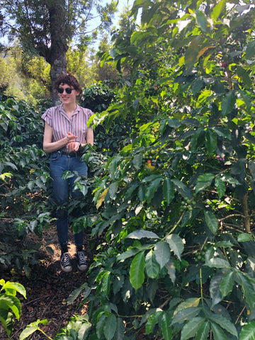 Woman in sunglasses smiling and picking coffee cherries