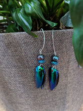 Real Jewel Beetle Earrings with Pearl