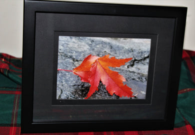 Maple Leaves On Rock