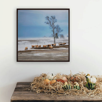 Digital Colour files, Wall art print of Winter farm scene, Photo of a herd of cows Titled: Curiosity DIY printable art work for $9.85