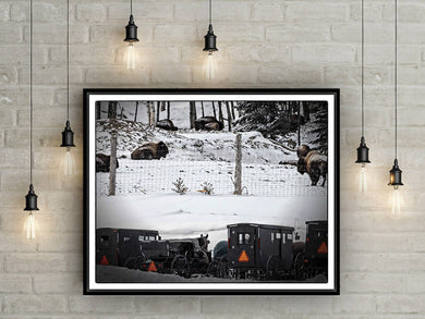 Digital colour files, Wall art of Winter scene, Photo of Buffalo and Mennonite Buggies Titled: A Day of Rest DIY printable art work for $9.85