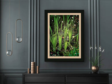 Digital files of a Colour wall art print of wetland plants and flowers, Titled: Centre-d-Interpretation, Nedelec Quebec DIY printable art work for $9.85