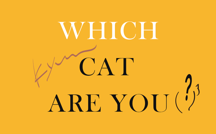 WHICH CAT ARE YOU?|9.kyuuコラム
