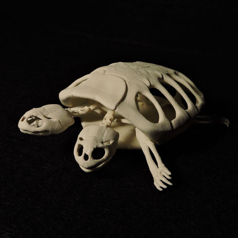 3D Printed Two-Headed Turtle Skeleton
