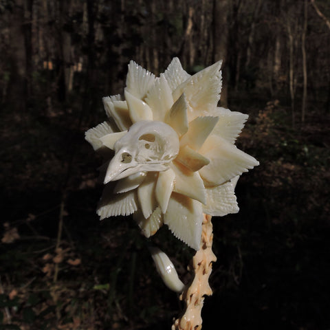 European Sparrow Skull Flower