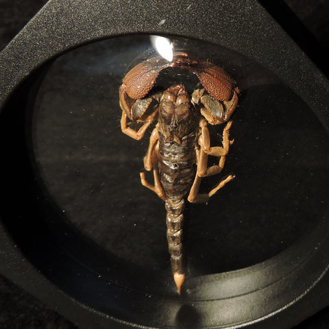 Scorpion in Floating Frame