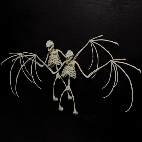 3D Printed Bat Skeleton Wholesale Lot of 5