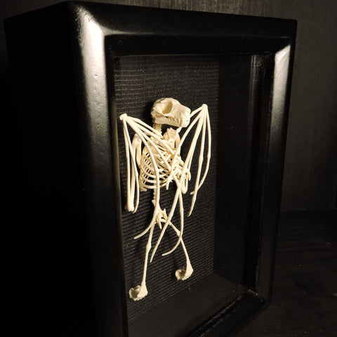 3D Printed Fruit Bat Skeleton (Wings Closed) Shadowbox Display