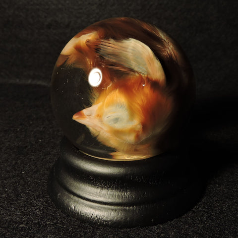 Chick Wet Specimen Globe
