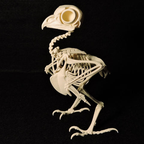Life-size 3D Printed Elf Owl Skeleton