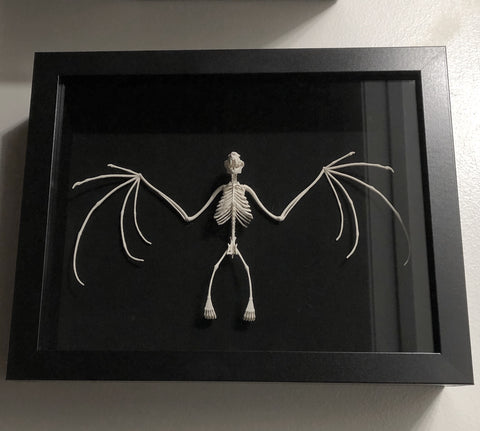 3D Printed Replica Fruit Bat Skeleton Shadowbox Display