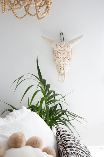 Carved Cow Lace Skull White