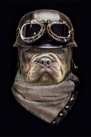 The Aviator - Custom Canvas Pet Art Work