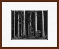 Redwoods, Bull Creek Flat