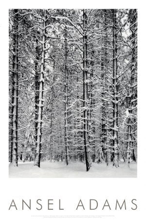 Pine Forest, Snow