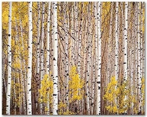 Aspen Grove, Colorado, 1993