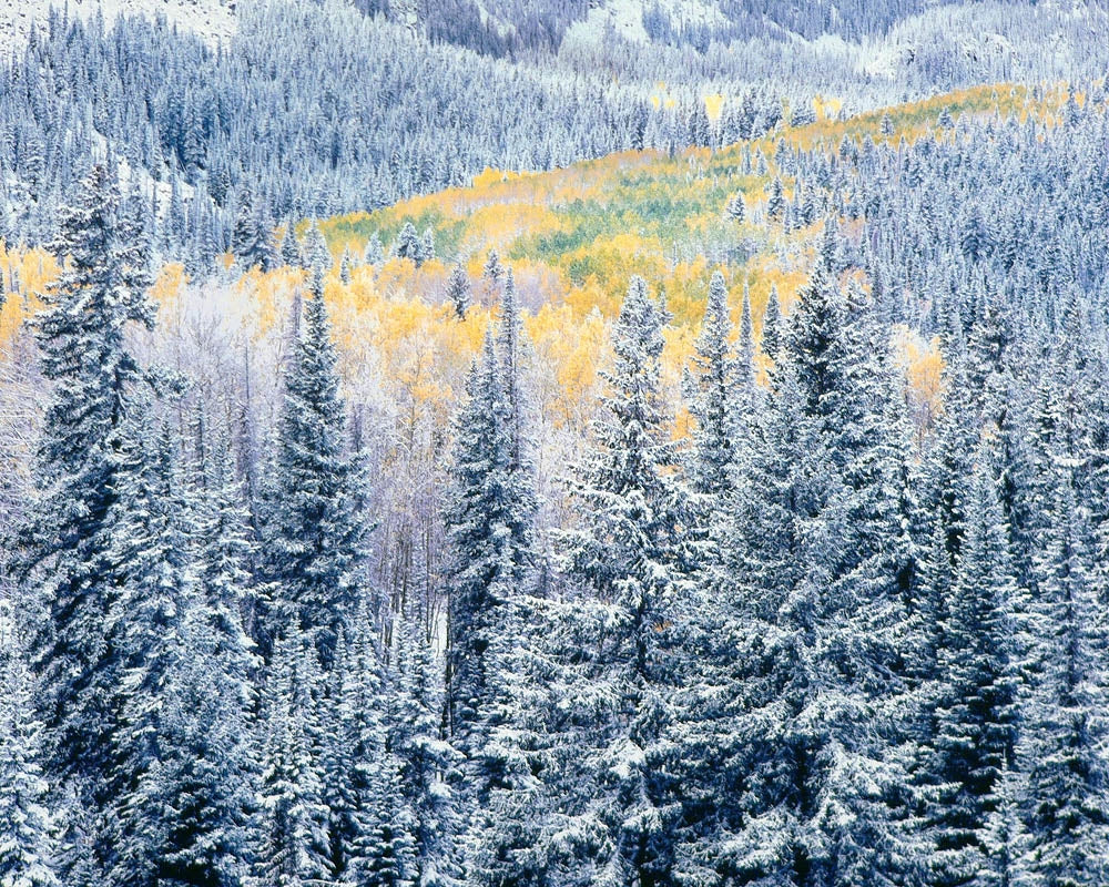 Early Winter Snowfall, Colorado