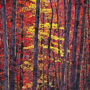 Woodland Epiphany, Virginia by Christopher Burkett - Ansel Adams Gallery