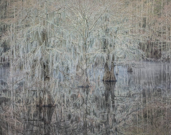 Misty Morning, Cypress Trees, Caddo Lake, Texas