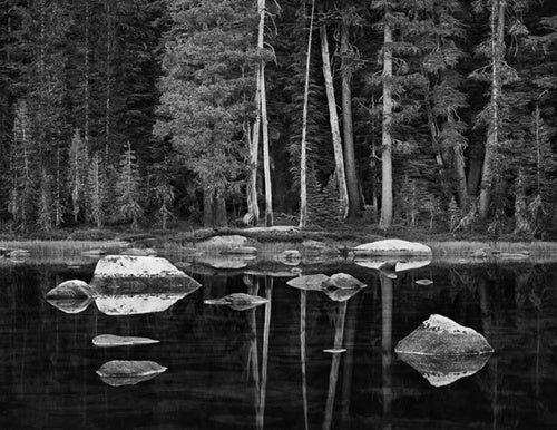 White Boulders and Forest, Dawn, Yosemite National Park, 2003