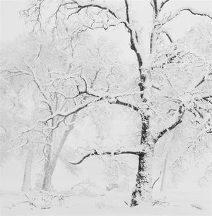 Trees in Snowstorm, Yosemite Valley, California 2011