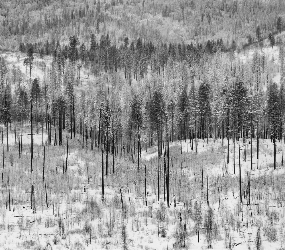 Trees on Hillside, Winter, Yosemite Valley 2011